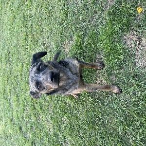 adoptable Dog in Florala, AL named Sadie