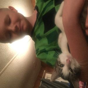 adoptable Cat in Terra Alta, WV named 19 cats