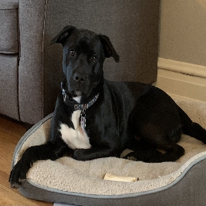 adoptable Dog in Charleston, WV named Ben