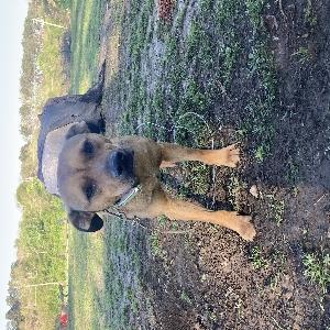 adoptable Dog in Dora, AL named Bear