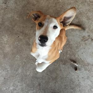 adoptable Dog in Sasakwa, OK named Rocco