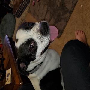 adoptable Dog in Inwood, WV named Kratos