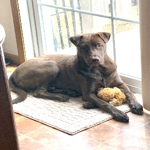adoptable Dog in , ND named Maverick