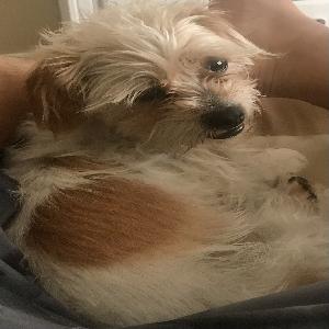 adoptable Dog in Sparks, NV named Niner