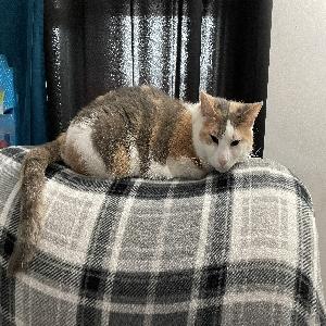 adoptable Cat in Cranston, RI named Kiki