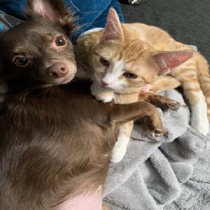 adoptable Cat in Charleston, WV named Garfield
