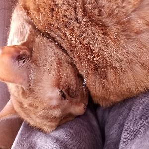 adoptable Cat in Omaha, NE named chad