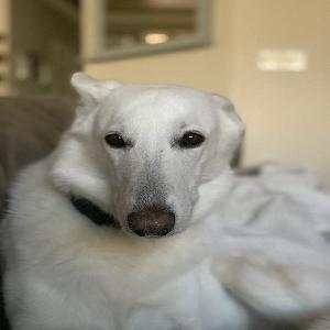 adoptable Dog in Edmond, OK named Suki