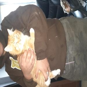 adoptable Cat in Meadowbrook, WV named Todoroki