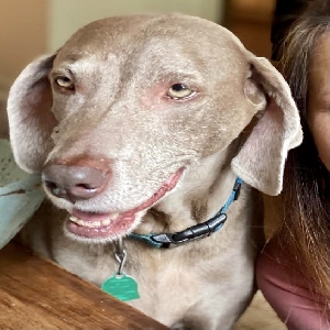 adoptable Dog in Fairhope, AL named Bella