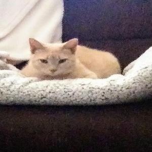 adoptable Cat in Danville, KY named Joe