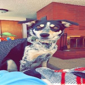 adoptable Dog in Klamath Falls, OR named Misfit