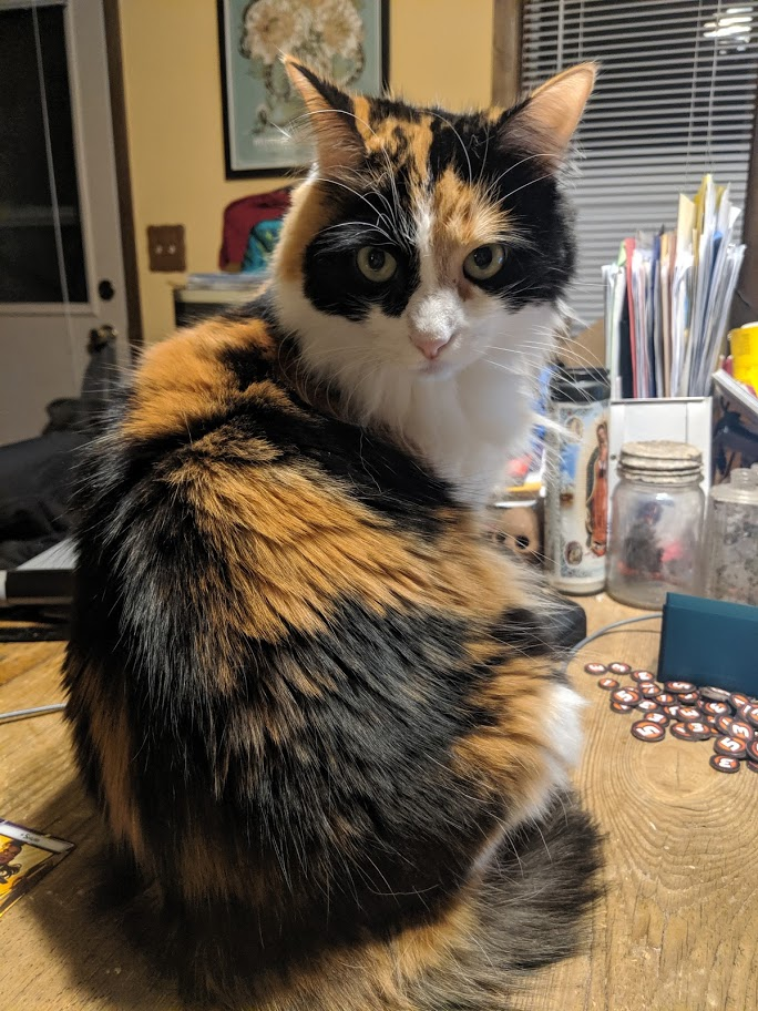 adoptable Cat in Denham Springs,LA named Hippolyta
