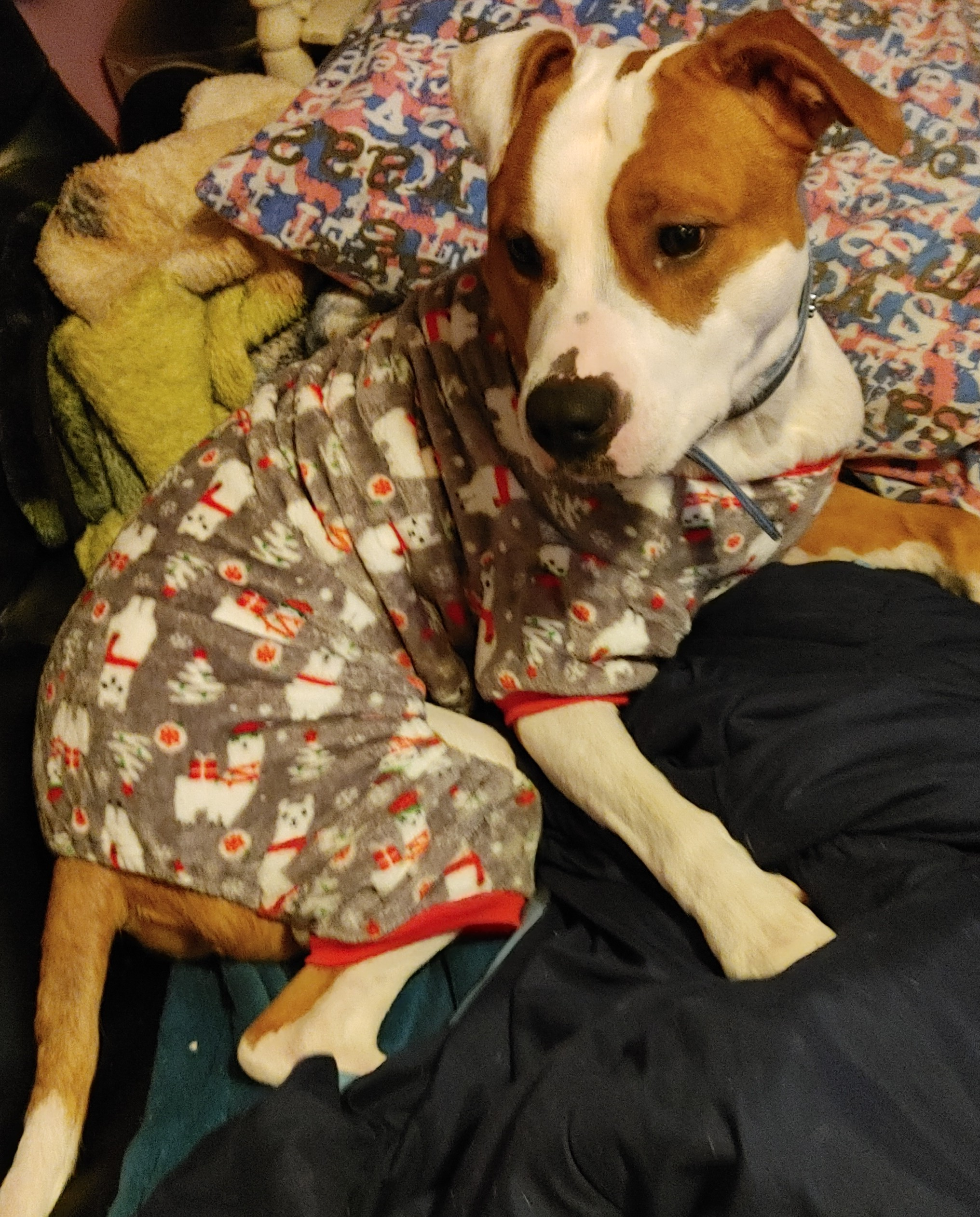 adoptable Dog in Martinsburg,WV named Chance