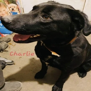 adoptable Dog in Oxford, IA named Charlie