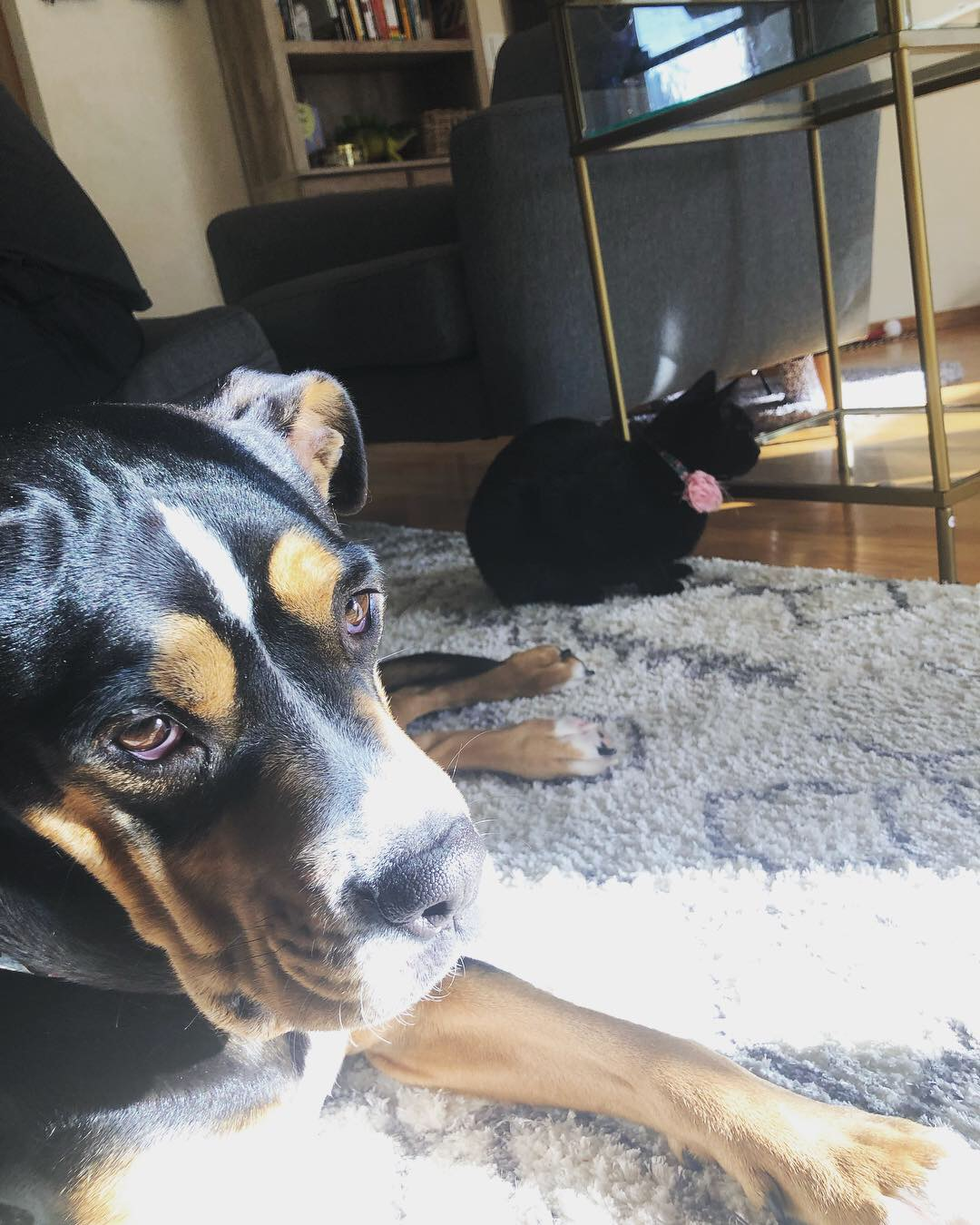 adoptable Dog in Portland,OR named Orca