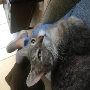 adoptable Cat in Middleton, WI named Sadie