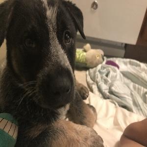 adoptable Dog in Lincoln, NE named Smokey