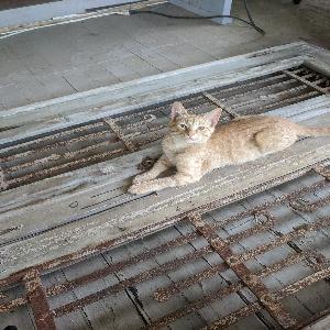 adoptable Cat in Talladega, AL named Pompeii
