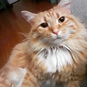 adoptable Cat in Warwick, RI named Ninja