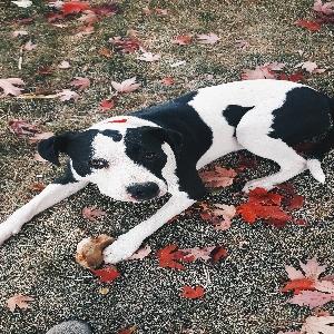 adoptable Dog in Boise, ID named Jada