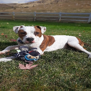adoptable Dog in Boise, ID named Winston