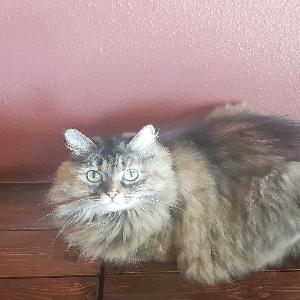 adoptable Cat in La Grande, OR named Mya