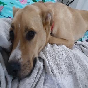 adoptable Dog in Athens, AL named Sparkles