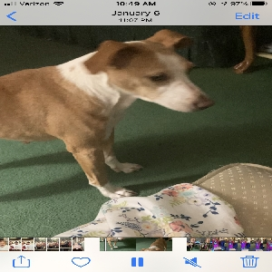 adoptable Dog in Huntington, WV named Don't really know