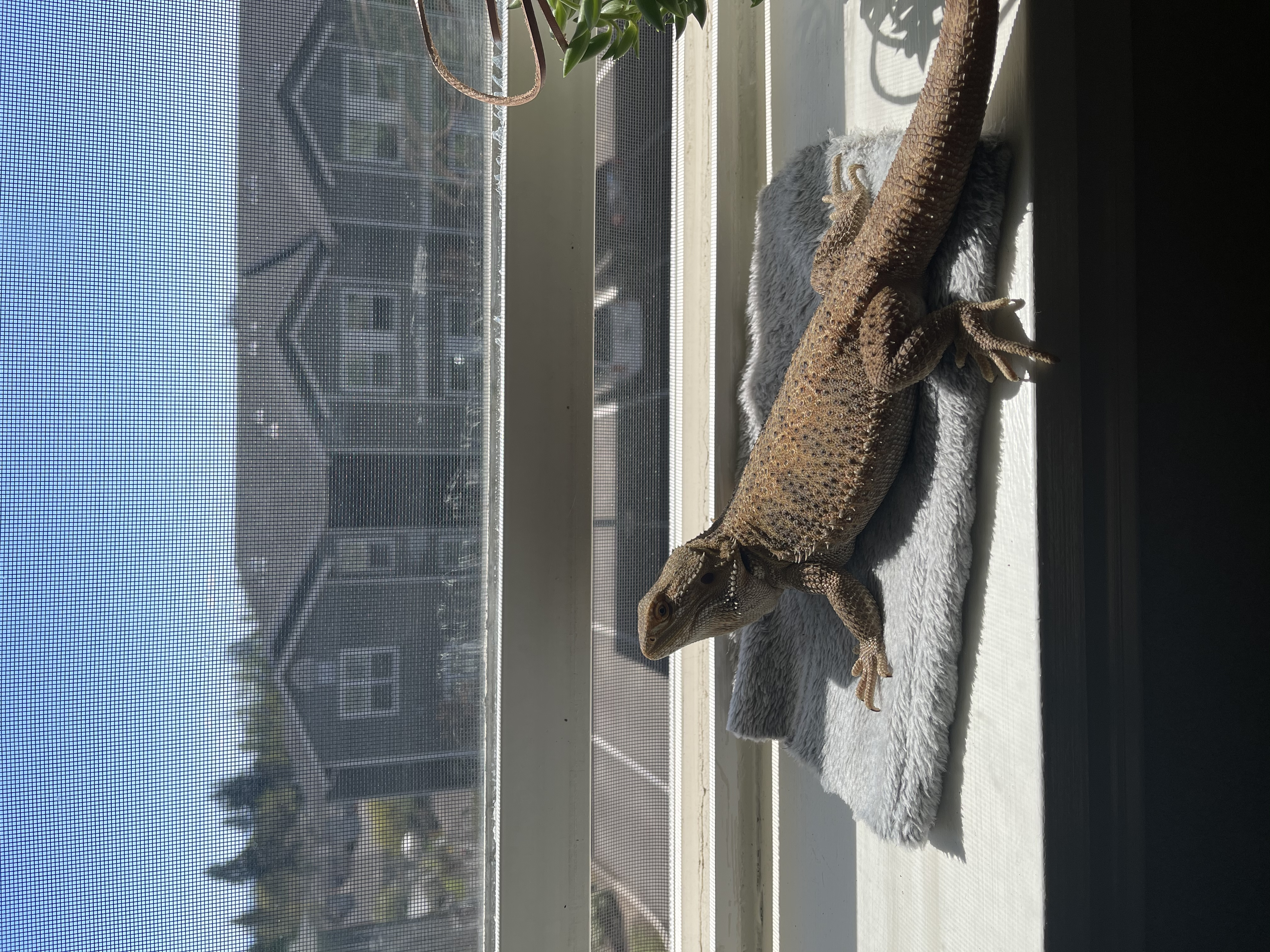 adoptable Reptile in Salem,OR named Tina