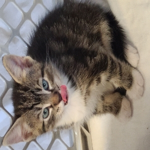 adoptable Cat in Slidell,LA named No name