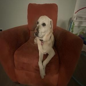 adoptable Dog in Columbia, SC named Peyton