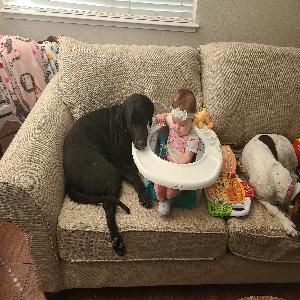 adoptable Dog in Reno, NV named Daisy