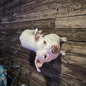 adoptable Dog in Tulsa, OK named Ghost