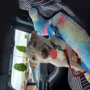 adoptable Dog in Acworth, GA named Steve