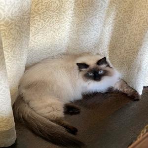 adoptable Cat in Bronxville, NY named Little Girl