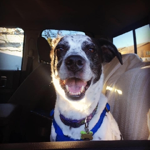 adoptable Dog in Washington, DC named Colbie