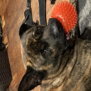 adoptable Dog in Washington, DC named Mega