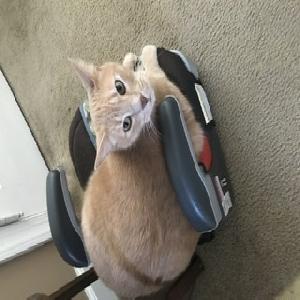adoptable Cat in West Deptford, NJ named Albie