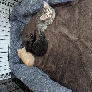 adoptable Cat in Omaha, NE named 3 kittens