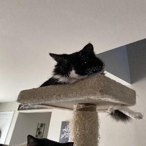 adoptable Cat in Lexington, SC named Mo