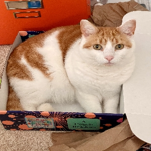 adoptable Cat in Myrtle Beach, SC named Purrcy Jackson