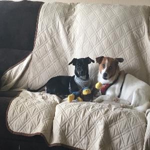 adoptable Dog in Bristol, WI named Peanut