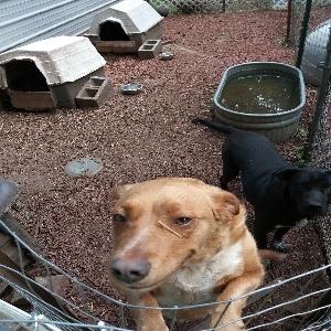 adoptable Dog in Chanute, KS named Abby