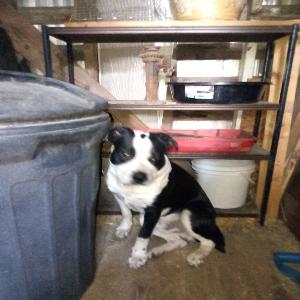 adoptable Dog in Chanute, KS named Titan