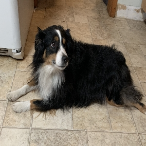 adoptable Dog in West Union, IA named Skye