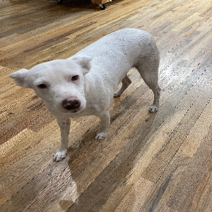 adoptable Dog in Albuquerque, NM named Uni