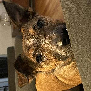 adoptable Dog in Sherwood, MI named Eddie