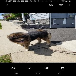 adoptable Dog in Hillside, NJ named Kong