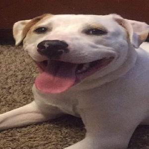 adoptable Dog in Bonne Terre, MO named Athena